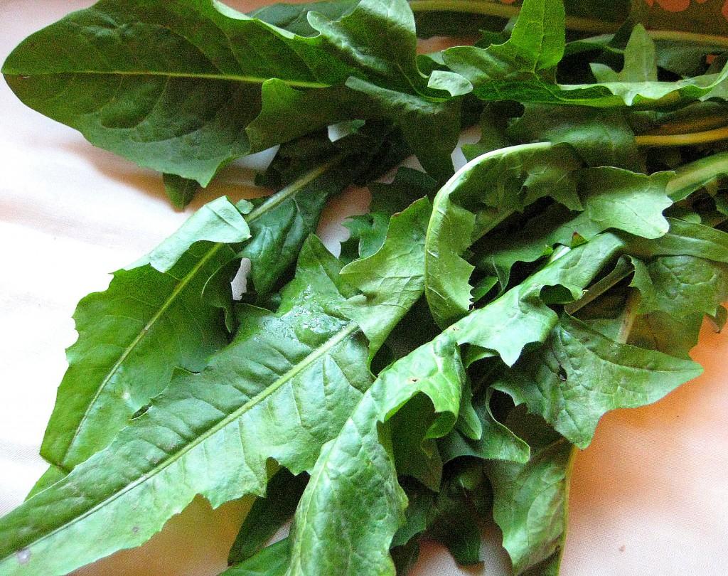 dandelion-greens-1-sa
